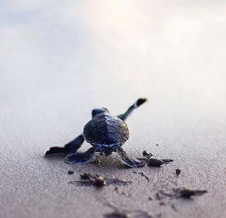 Hilf mit bei Mavis Schildkröten-Aktion
